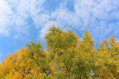 Jesieni fotografia stosowna dla tapety na komputerowy obrazek nabierającym Listopadu Stara Zagora Bułgaria niebie i drzewie zdjęcia stock