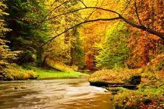 Jesieni góry rzeka Zamazane fala, świezi zieleni mechaci kamienie i głazy na brzeg rzeki zakrywającym z kolorowymi liśćmi od star Zdjęcie Stock