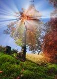 Jesieni góry Ukraina zdjęcia stock