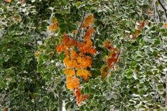Jesieni gałąź Zdjęcia Stock