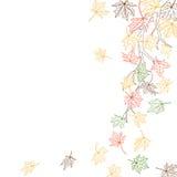 Jesieni gałąź Zdjęcie Royalty Free