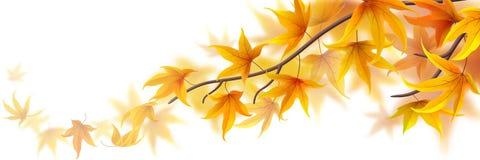 Jesieni gałąź royalty ilustracja
