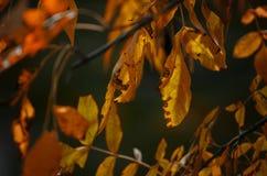Jesieni gałąź zdjęcie stock