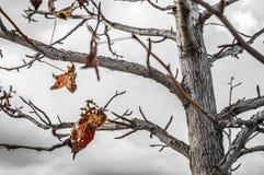 Jesieni gałąź Fotografia Royalty Free
