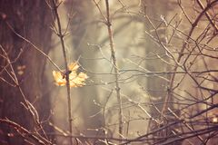 Jesieni gałąź drzewo ubierali w liści i raindrops shinin fotografia royalty free
