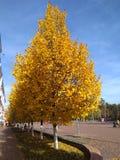 Jesieni geometria Żółci trójboki drzewa fotografia royalty free