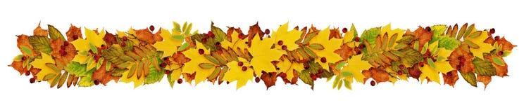 Jesieni girlandy fron kolorowi liście i jagody Zdjęcia Royalty Free