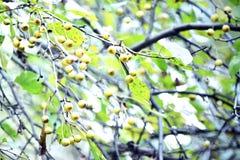 Jesieni greenery Zdjęcia Royalty Free