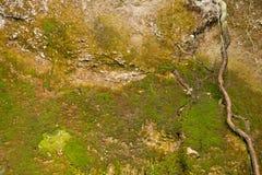 Jesieni grunge piaskowaty ścienny tło zdjęcie royalty free