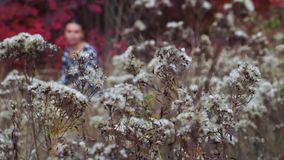 Jesieni halizna kwiaty zbiory wideo