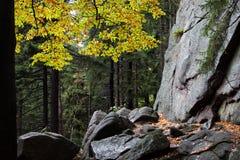 Jesieni Halny Lasowy pustkowie Zdjęcia Stock