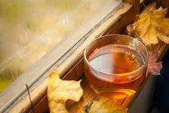 Jesieni herbata Obraz Royalty Free