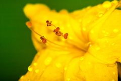 Jesieni i wiosny kwiaty zdjęcie stock
