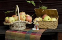 Jesieni jabłka Zdjęcie Stock