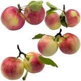 Jesieni jabłka Zdjęcia Stock