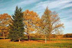 Jesieni jesieni natura yellowed pole w jesieni pogodnej pogodzie - rocznika filtr stosować Zdjęcia Royalty Free
