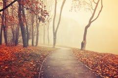 Jesieni jesieni parka mgłowa aleja z nagimi jesieni drzewami i spadać jesień liśćmi Fotografia Royalty Free