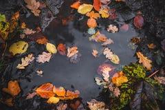 Jesieni kałuża po deszczu zdjęcia royalty free