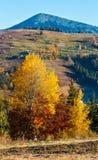 Jesieni Karpacka wioska, Ukraina Zdjęcie Royalty Free