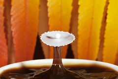 Jesieni kawa z pluśnięciem mleko Fotografia Stock