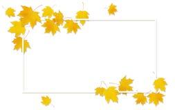 Jesieni klonowa gałązka z żółtymi liśćmi Zdjęcia Stock