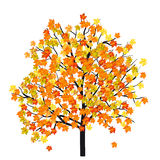 Jesieni Klonowy drzewo Fotografia Royalty Free