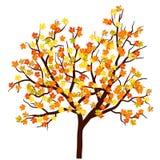 Jesieni Klonowy drzewo ilustracja wektor