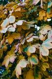 Jesieni kolor żółty liście obrazy royalty free