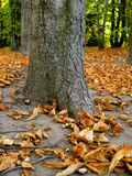 jesienią kolorowa scena Zdjęcie Royalty Free