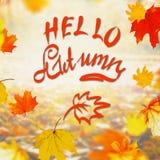 Jesieni kolorowy spadać opuszcza na słonecznym dniu z teksta literowania jesienią Cześć, plenerowa spadek natura obrazy stock