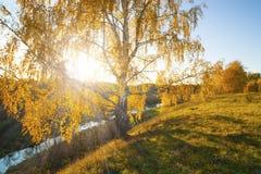 jesieni krajobrazowa osamotniona brzoza Zdjęcia Royalty Free