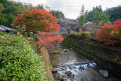 Jesieni krajobrazowego tła Czerwony urlop w Obara Nagoya Japonia Fotografia Stock