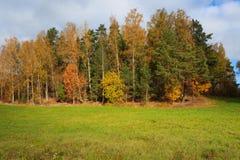 Jesieni krajobrazowi drzewa Zdjęcia Stock