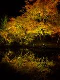 Jesieni krajobrazu, koloru żółtego, pomarańcze i czerwieni jesieni liście, i drzewa, kolorowy ulistnienie podczas nocy z niektóre Zdjęcia Royalty Free