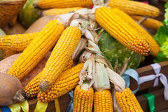 Jesieni kukurudzy wciąż życie Zdjęcia Royalty Free
