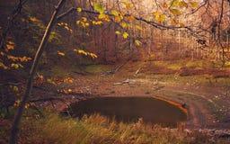 Jesieni Las jezioro Obrazy Royalty Free