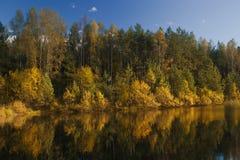 Jesieni Las jezioro Zdjęcie Stock