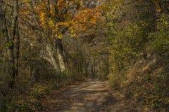 Jesieni lasowa ścieżka w słonecznym dniu obrazy stock