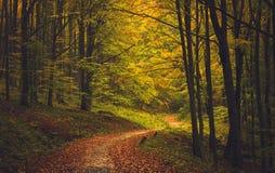 Jesieni Lasowa droga Zdjęcie Royalty Free