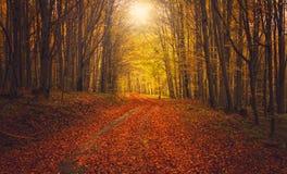 Jesieni Lasowa droga Fotografia Royalty Free