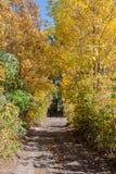 Jesieni Lasowa droga Zdjęcia Stock