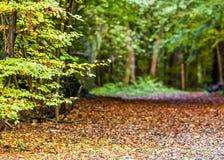 Jesieni lasowa scena w krajowej rezerwy parku zdjęcie stock