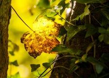 Jesieni lasowa scena w krajowej rezerwy parku fotografia royalty free