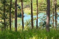 Jesieni lasowi drzewa obok jeziora Obrazy Stock