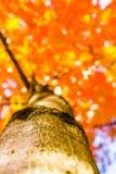 Jesieni lasowi drzewa od dna natury światła słonecznego zieleni drewniani tła, Miękka ostrość! płytka głębia pole Obrazy Royalty Free