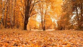 Jesieni lasowy Piękny tło, park w jaskrawych liściach Droga w lesie na pogodnym popołudniu zielona pomarańcze Zdjęcia Royalty Free