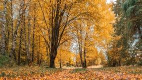 Jesieni lasowy Piękny tło, park w jaskrawych liściach Droga w lesie na pogodnym popołudniu zielona pomarańcze Zdjęcie Royalty Free
