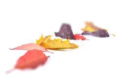 Jesieni leavs zdjęcia stock