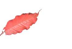 Jesieni leavs zdjęcie royalty free