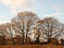 Jesieni linii horyzontu drzewnego brązu nagie gałąź żadny liść spadać jasny s Fotografia Stock
